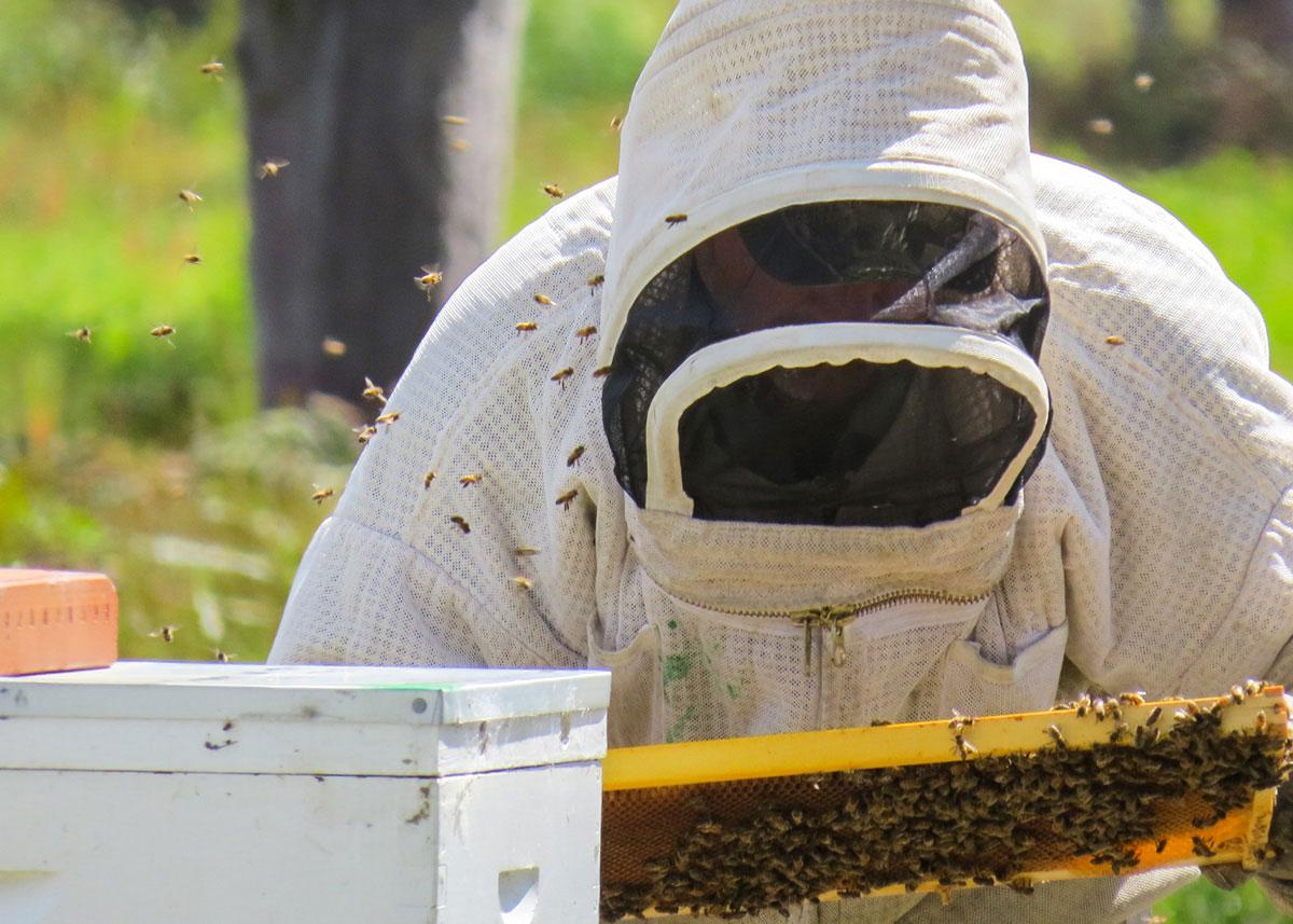 beekeepers Australian Food Services Manuka Honey