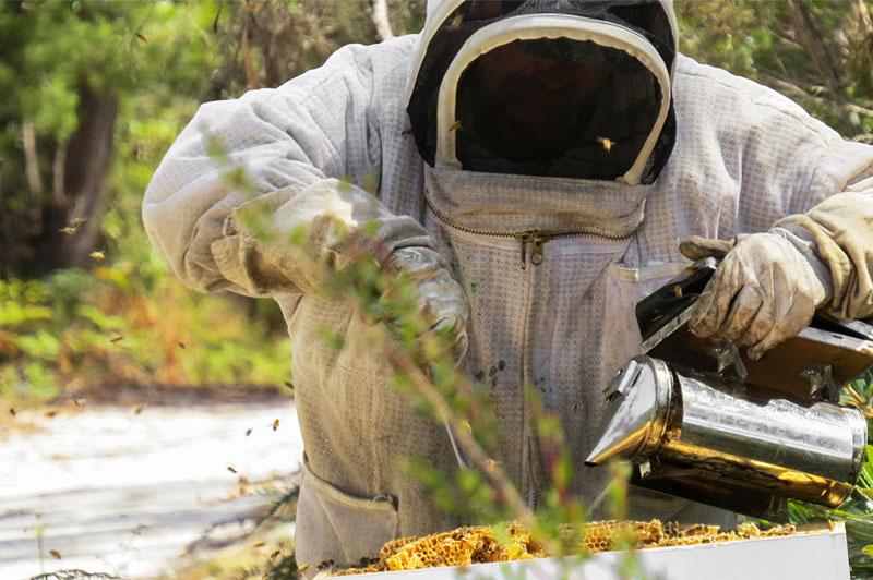 Beekeeper Manuka Honey Australian Food Services