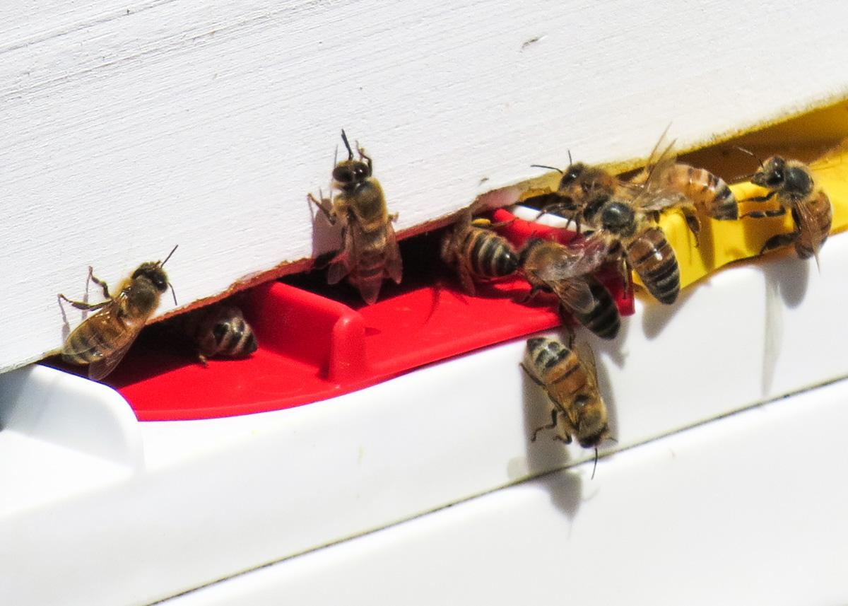 beehive port macquarie