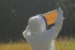 Manuka Honey beekeeper