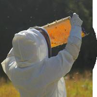 manuka honey beekeeper